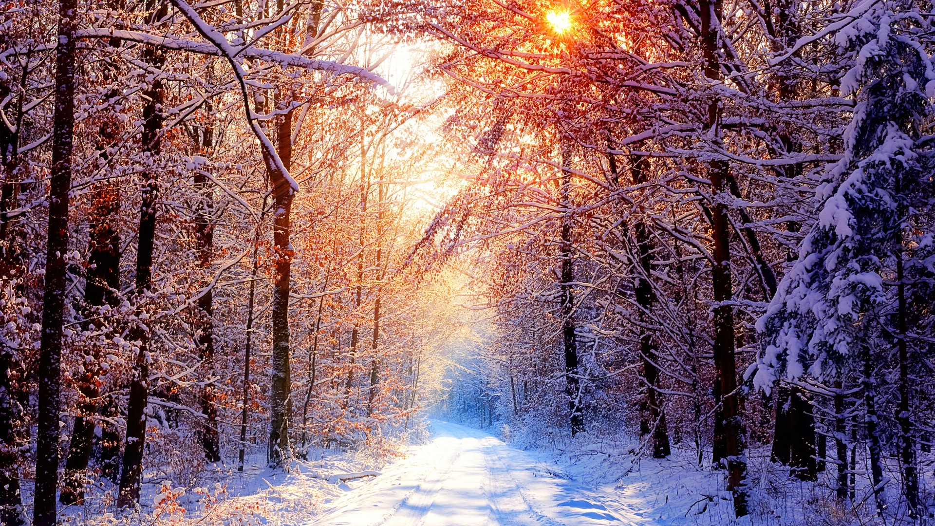 красивые обои зима